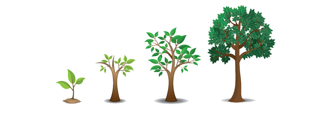 MS Productions Tree Illustrations