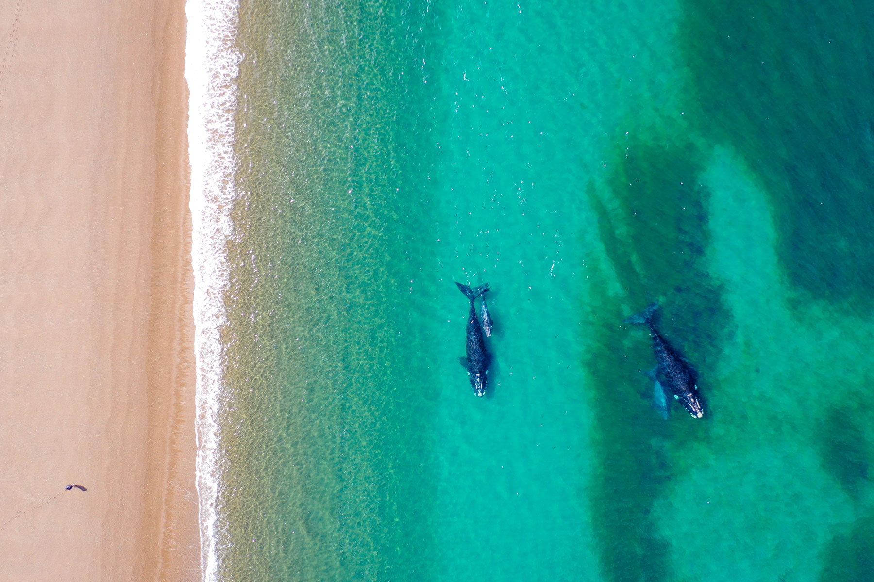 MS Productions Drone Aerial Beach Whales Nature